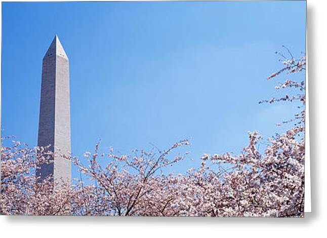 Flower Memorial Photography Greeting Cards - Washington Monument Behind Cherry Greeting Card by Panoramic Images