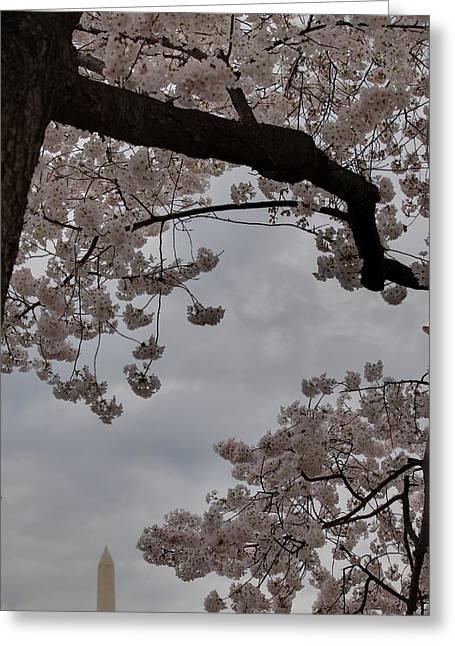 Destinations Greeting Cards - Washington Monument - Cherry Blossoms - Washington DC - 011318 Greeting Card by DC Photographer