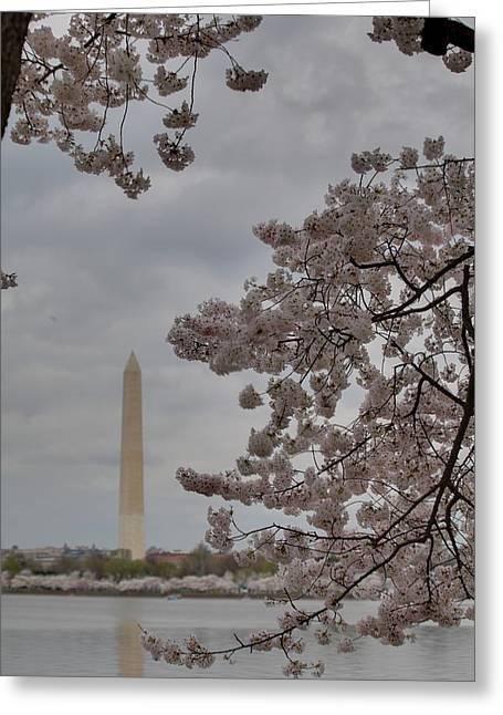 Outside Greeting Cards - Washington Monument - Cherry Blossoms - Washington DC - 011319 Greeting Card by DC Photographer