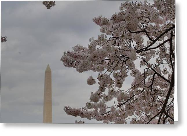 Washington Monument - Cherry Blossoms - Washington DC - 011319 Greeting Card by DC Photographer