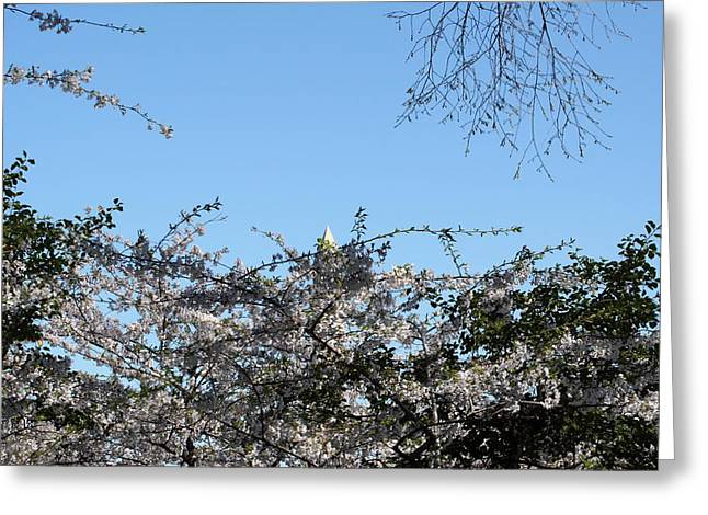 Japan Photographs Greeting Cards - Washington Monument - Cherry Blossoms - Washington DC - 01132 Greeting Card by DC Photographer