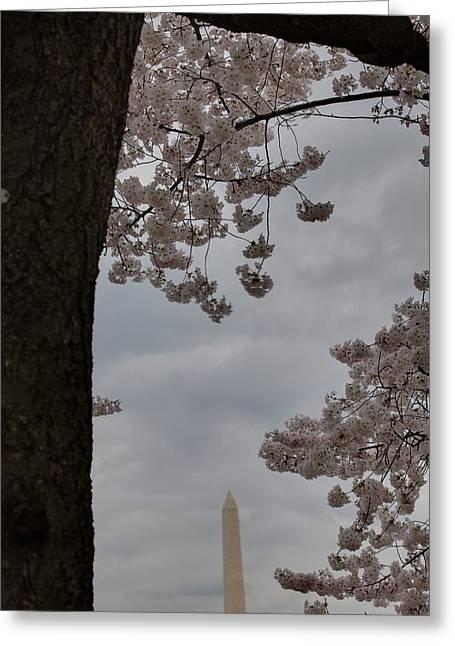 Japanese Greeting Cards - Washington Monument - Cherry Blossoms - Washington DC - 011322 Greeting Card by DC Photographer