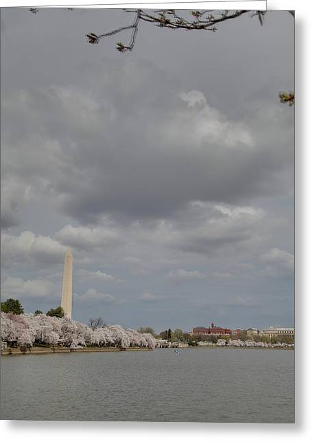 White Photographs Greeting Cards - Washington Monument - Cherry Blossoms - Washington DC - 011333 Greeting Card by DC Photographer