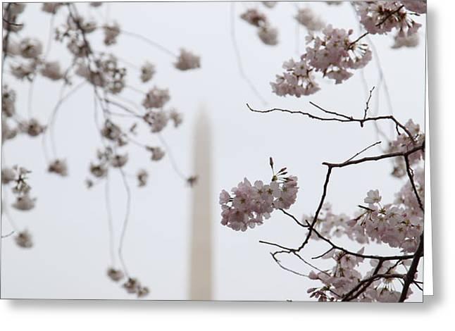 Washington Monument - Cherry Blossoms - Washington DC - 011339 Greeting Card by DC Photographer