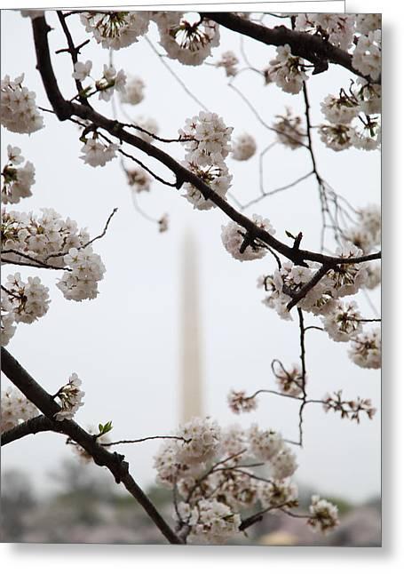 Usa Photographs Greeting Cards - Washington Monument - Cherry Blossoms - Washington DC - 011341 Greeting Card by DC Photographer