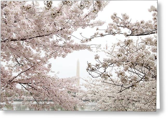 Usa Photographs Greeting Cards - Washington Monument - Cherry Blossoms - Washington DC - 011343 Greeting Card by DC Photographer
