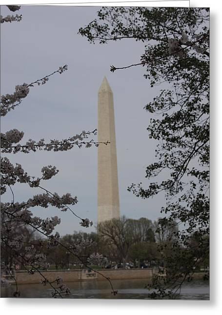 Washington Monument - Cherry Blossoms - Washington Dc - 01138 Greeting Card by DC Photographer