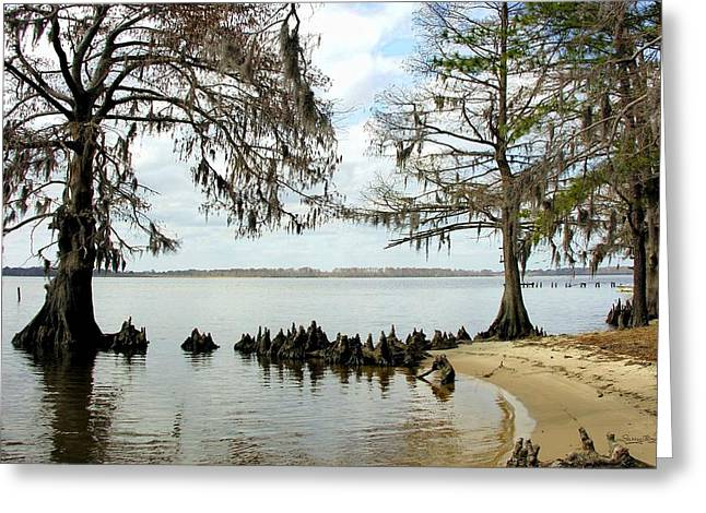Nc Estate Greeting Cards - Washington Park Shoreline Greeting Card by Larry M Boyd