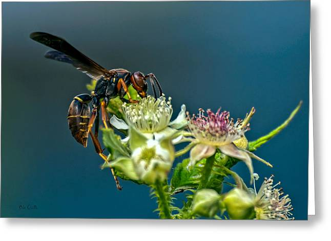Nectar Greeting Cards - Wasp Greeting Card by Bob Orsillo