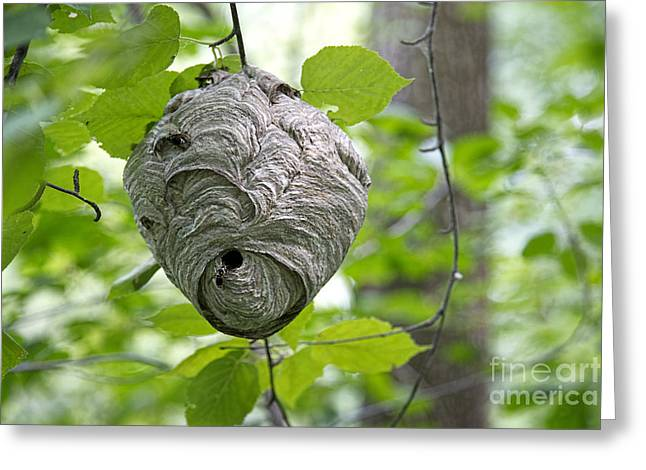 Mentality Greeting Cards - Wasp Nest Greeting Card by David Arment