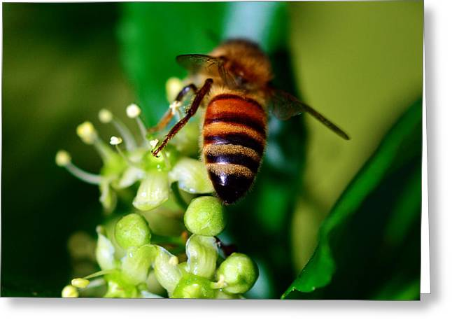 Green Hornets Greeting Cards - Wasp on flower Greeting Card by Toppart Sweden