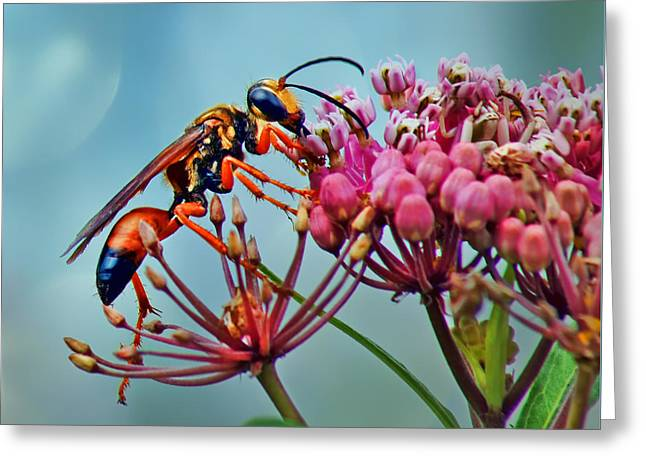 Stinger Greeting Cards - Wasp on Milkweed - Yellowjacket Greeting Card by Nikolyn McDonald