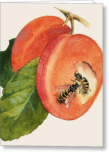 Wasps Greeting Cards - Wasps Greeting Card by English School