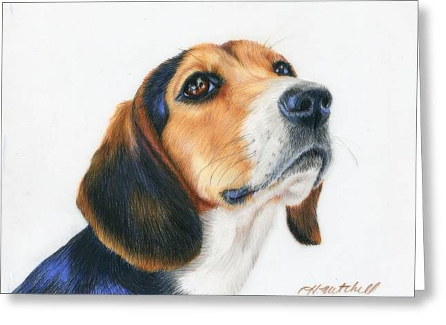Puppies Drawings Greeting Cards - Watch Me Beagle Greeting Card by Heather Mitchell