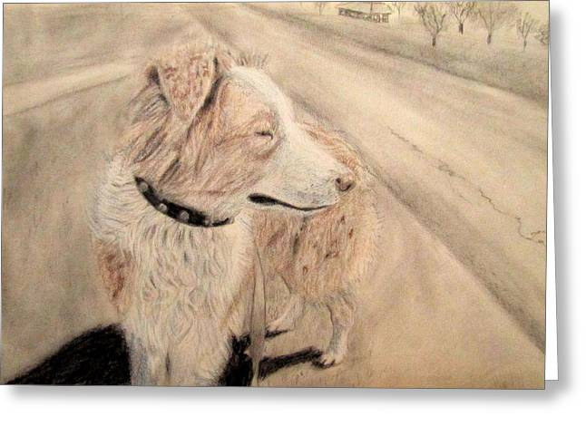 Guard Dog Drawings Greeting Cards - Watchdog Aussie Greeting Card by Mikayla Stallings
