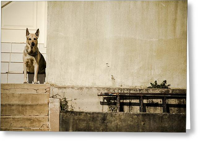 Watchdog Greeting Cards - Watchdog Greeting Card by Luciano Trevisan
