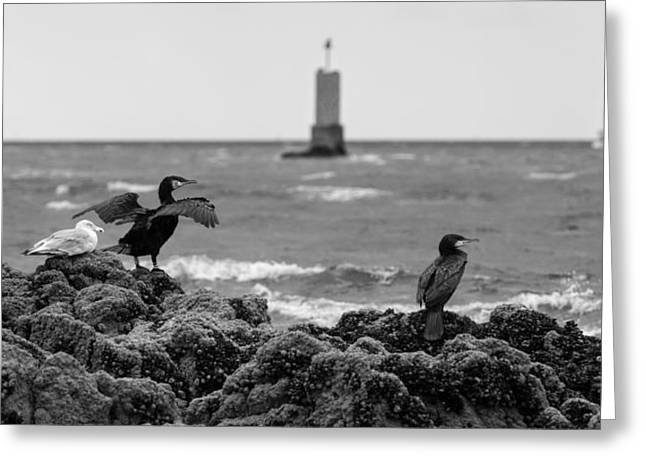Observer Greeting Cards - Watchers on the coast Greeting Card by Patrick Jacquet