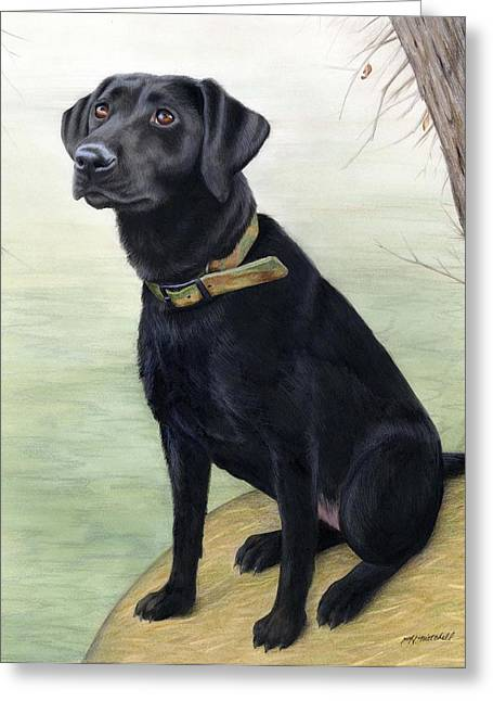 Puppies Drawings Greeting Cards - Watchful Black Lab Greeting Card by Heather Mitchell