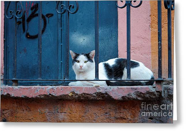 Painted Cat Greeting Cards - Watchful Cat, Mexico Greeting Card by John Shaw