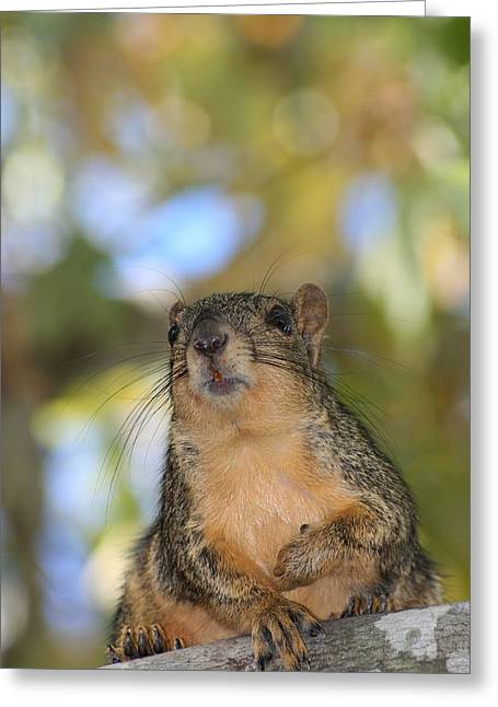 Fox Squirrel Greeting Cards - Watchful Greeting Card by Ester  Rogers