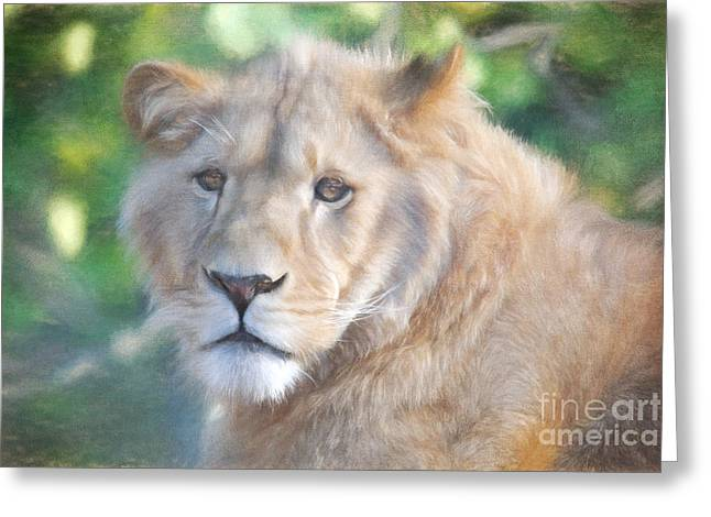 Southwick Greeting Cards - Watchful Eye Greeting Card by Jayne Carney