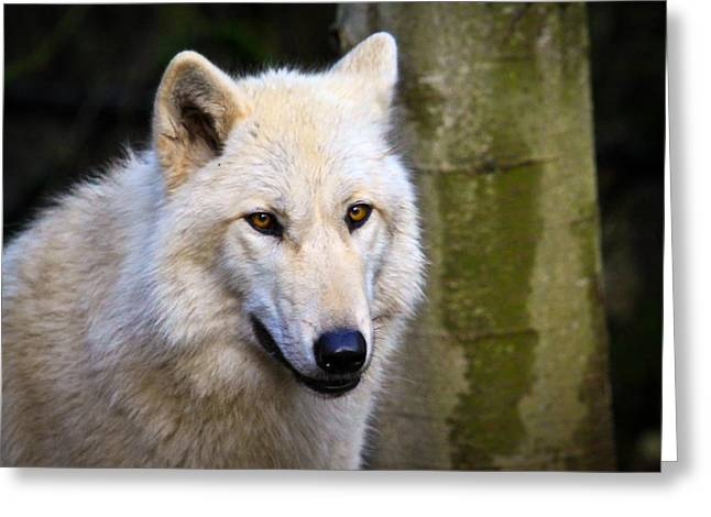 Preditor Greeting Cards - Watchful Eyes Greeting Card by Steve McKinzie