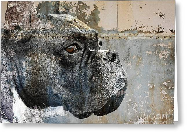 Boxer Dog Greeting Cards - Watchful Greeting Card by Judy Wood