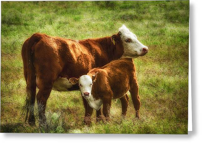 Pastureland Greeting Cards - Watchful Mom Greeting Card by John Trax