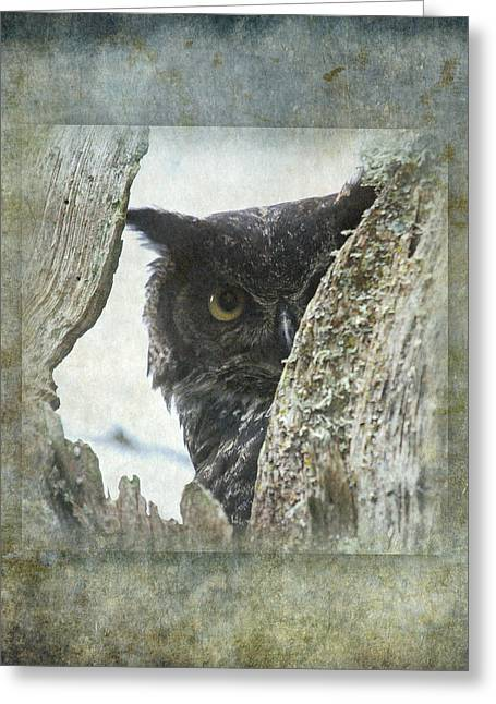 Owl Eyes Greeting Cards - Watchful Owl Greeting Card by Angie Vogel