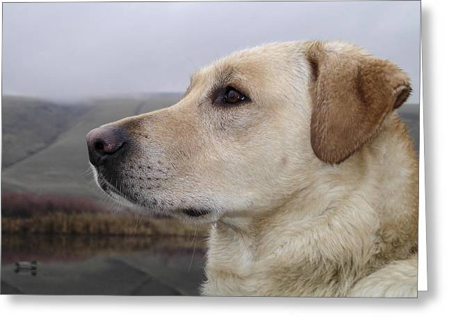 Attentive Labrador Dog Greeting Cards - Watching for Ducks Greeting Card by Jean Noren