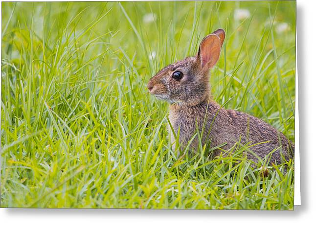 Adorable Bunny Greeting Cards - Watching for his Mum Greeting Card by Shelby  Young