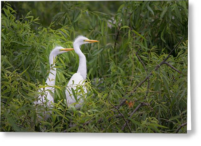 Wadding Greeting Cards - watching for Mom Greeting Card by Denis Therien