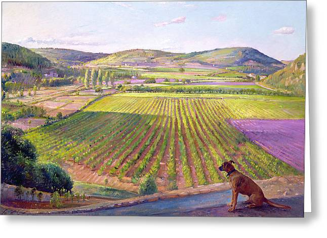 Plowing Field Greeting Cards - Watching from the Walls Old Provence Greeting Card by Timothy  Easton