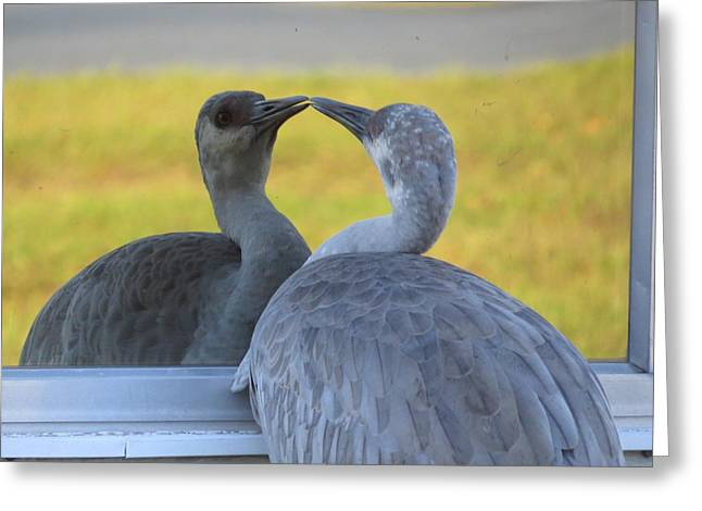 Bird Photographs Greeting Cards - Watching himself Greeting Card by Zina Stromberg