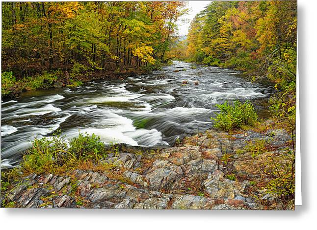 Rainbow Trout Greeting Cards - Watching it all go by  at Beavers Bend Broken Bow Fall  Foliage Oklahoma Greeting Card by Silvio Ligutti