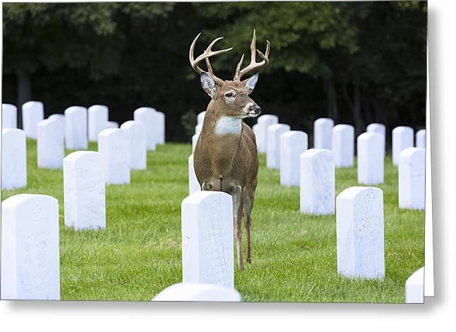 National Cemetery Greeting Cards - Watching Over Departed Souls Greeting Card by Bill Tiepelman