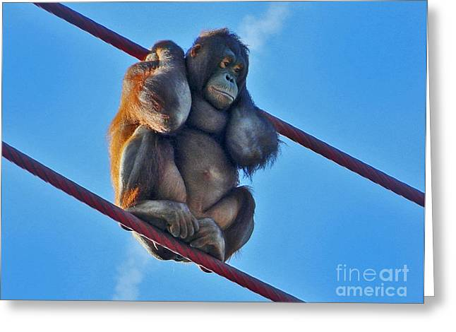 Orangutan Digital Art Greeting Cards - Watching People From The O-Line Greeting Card by Emmy Marie Vickers