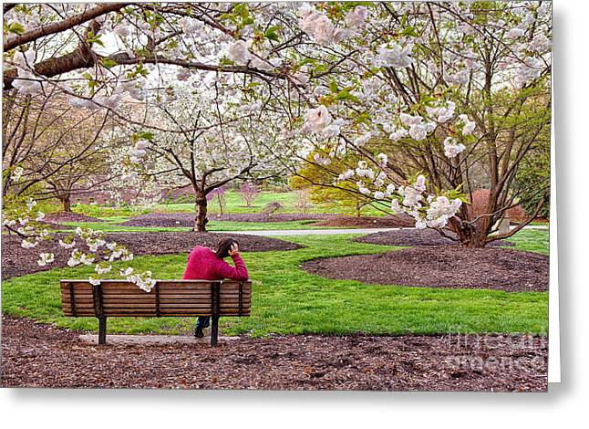 Photographers Greensboro Greeting Cards - Watching Spring Explode - North Carolina Greeting Card by Dan Carmichael