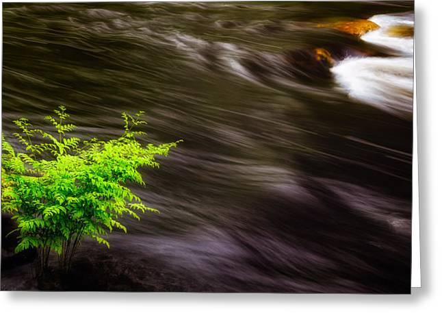 Long Exposure Waterflow Greeting Cards - Watching The River Flow Greeting Card by Jeff Sinon