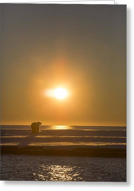 Ocean Mammals Greeting Cards - Watching the Setting Sun Greeting Card by Tim Grams
