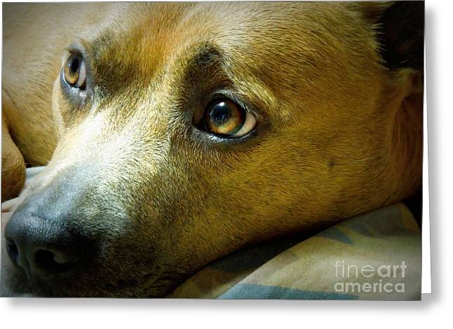 Apbt Greeting Cards - Watching The Sun Go Down Greeting Card by Renee Trenholm