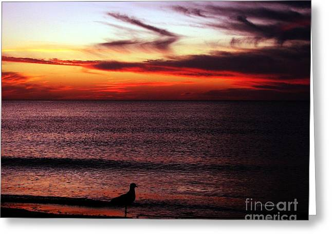 Forida Greeting Cards - Watching the Sunset Greeting Card by Doris Wood