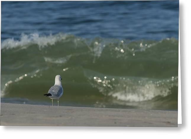 Bathroom Prints Greeting Cards - Watching the Waves Seaside Park NJ Greeting Card by Terry DeLuco