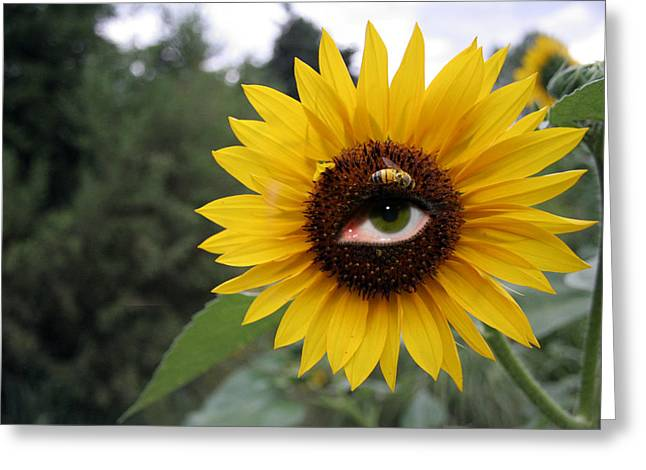 Yellow Sunflower Pyrography Greeting Cards - Watching You Greeting Card by Alexandra Louie