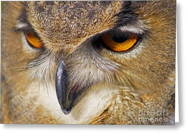 Famous Photographer Greeting Cards - Watching You Greeting Card by Jonathan Steward