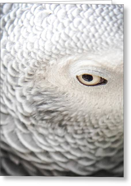Amazon Parrot Greeting Cards - Watching You Watching Me Greeting Card by Karen Wiles