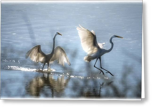 Water Ballet  Greeting Card by Saija  Lehtonen