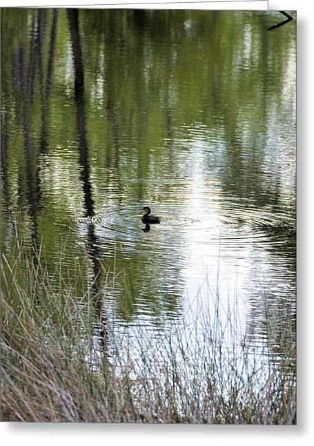 Wildlife Refuge. Greeting Cards - Water Circles Greeting Card by Jan Amiss Photography