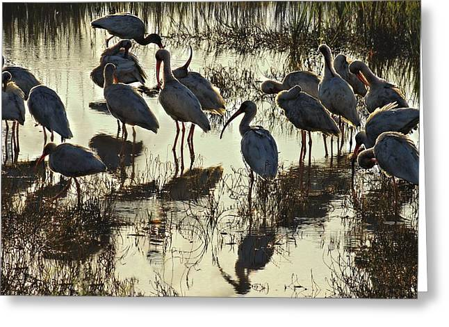 Tidal Photographs Greeting Cards - Water Cooler Visionary Greeting Card by Laura Ragland