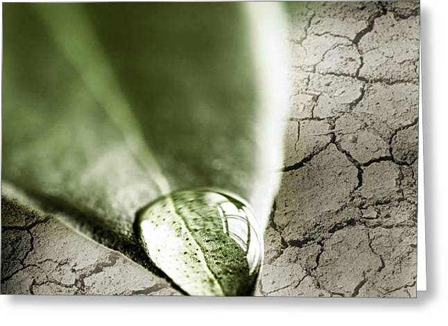 Water drop on green leaf Greeting Card by Elena Elisseeva